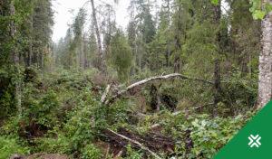 Natura 2000 toetuse taotlemine Metsaühistu