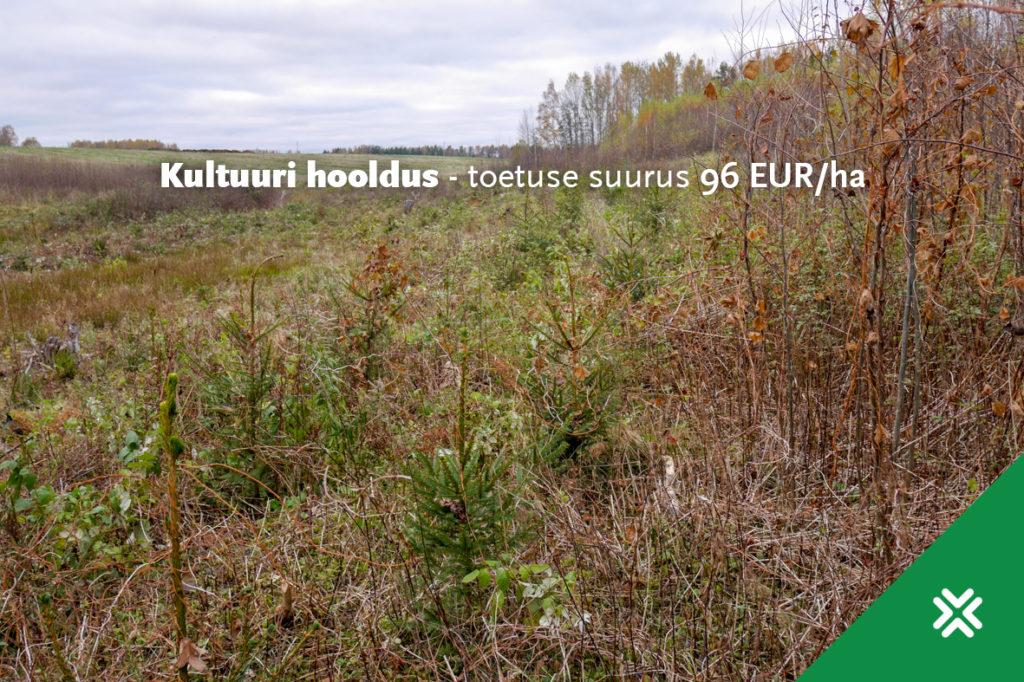 kultuuri_hooldus