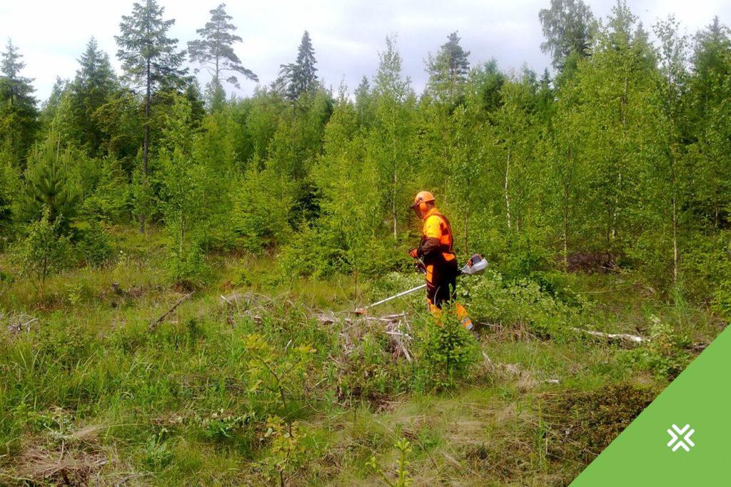 Uus valitsusliit peab arvestama ka metsandusega!