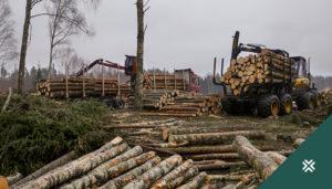 metsaraie puidu vaheladu metsaühistu