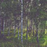 Metsa tark hooldamine tõstab metsa väärtust