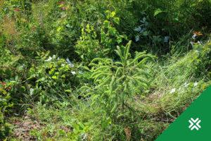 Metsa uuendustoetus Metsaühistu