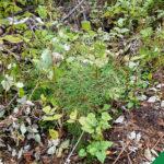 Noor mets vajab sügisel hooldust
