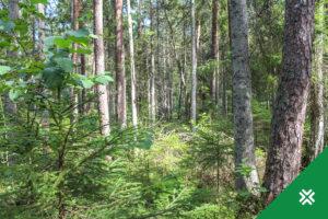 Püsimetsandus Metsaühistu