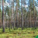 Piirangud, millest metsaomanik midagi ei tea
