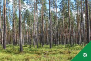 Potentsiaalsed vääriselupaigad Metsaühistu