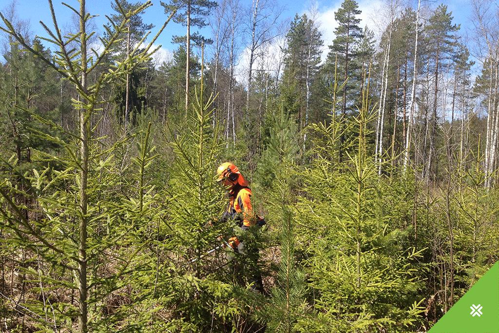 Metsameede toetus Metsaühistu