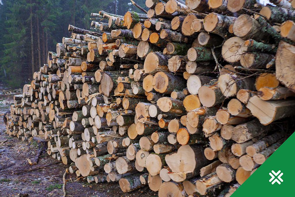 Metsa müük enampakkumised Metsaühistu