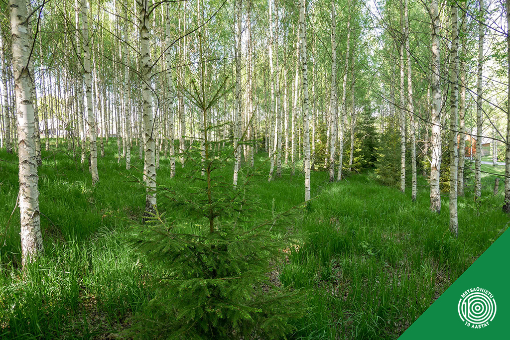 Metsaomanik Jüri Kriisemann. Metsaühistu