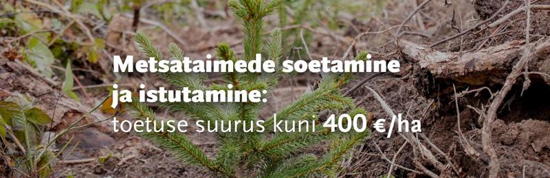 Metsataimede soetamise toetus - Metsaühistu