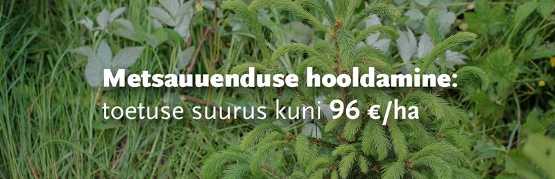Metsakultuuri hooldamise toetus Metsaühistu