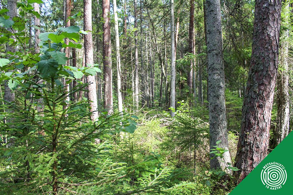 Mida oma metsaga teha Metsaühistu