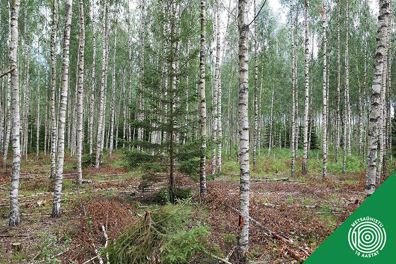 Hooldusraie. Metsameede toetus. Metsaühistu