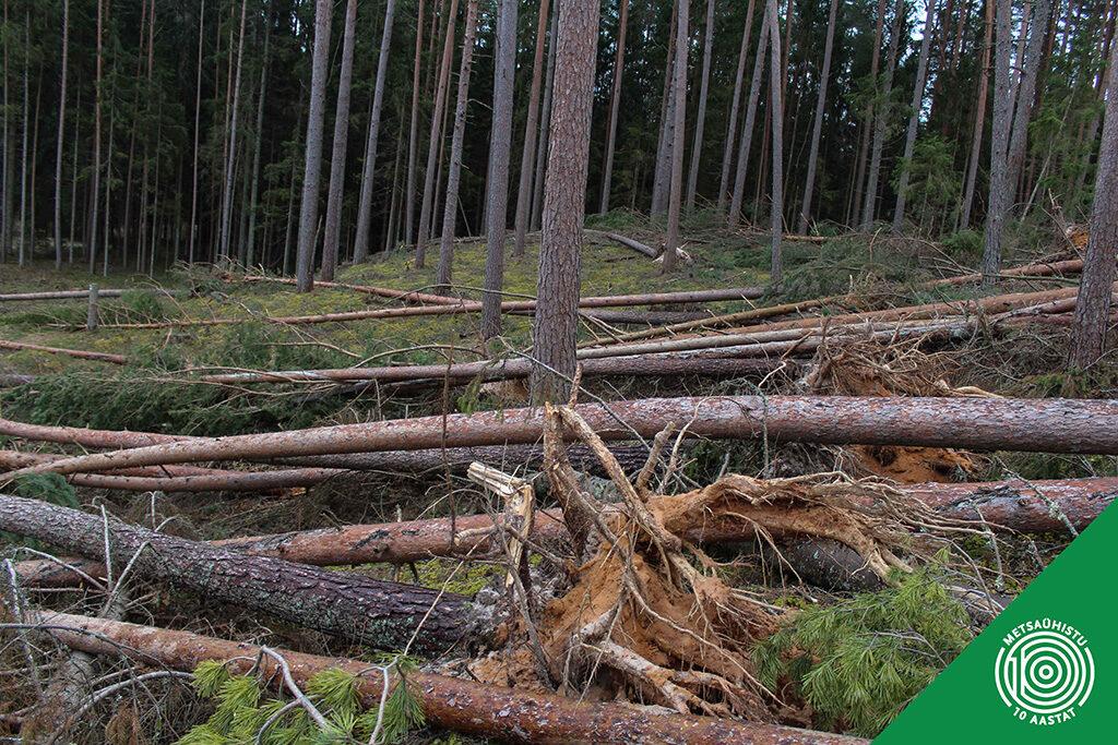 Kooreürask - putukas, kes ohutab metsi. Metsaühistu