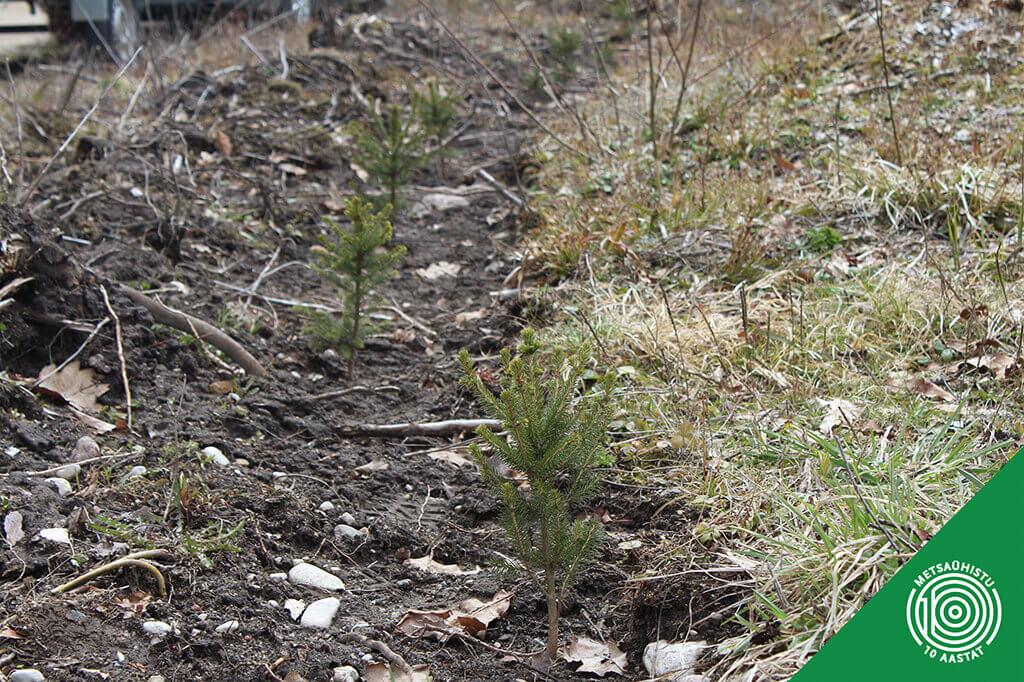 Metsa uuendamise toetus. Metsaühistu